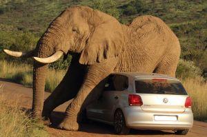 Resilience - Elephant